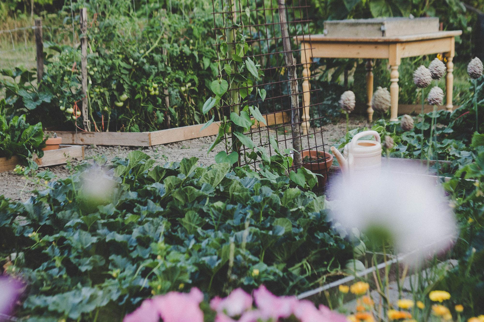 Un Petit Potager Productif comment faire un petit jardin potager ? - troc legumes